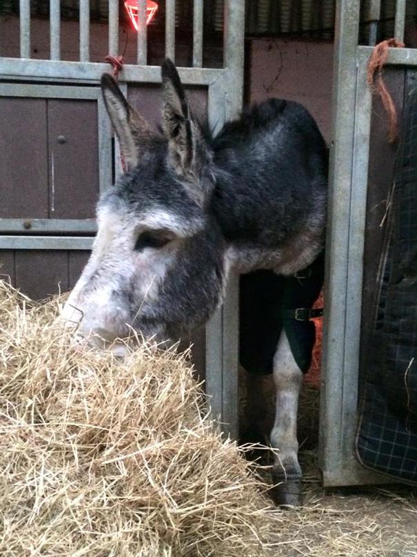 O burro deve voltar para seu dono em breve (Reprodução/Facebook)
