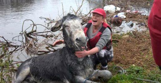 Burro sorri após ser resgatado de enchente na Irlanda