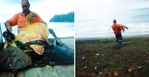 Homem compra tartarugas em mercado e as leva de volta para o mar