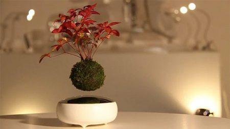 Nova invenção japonesa permite que os bonsais flutuem sobre seus vasos