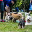 Parque Ibirapuera: para pets que gostam de ficar livres, leves e soltos  - Foto: Cris Berger