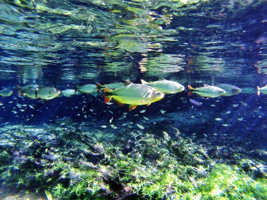Flutuação do Recanto Ecológico Rio da Prata