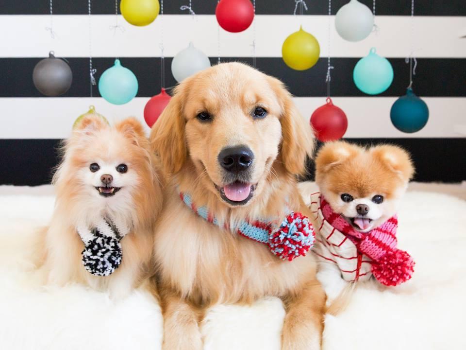 Instagram: 10 perfis de cachorros para você seguir e se ...