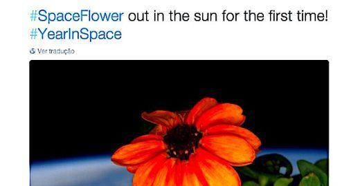 Flor nasce pela primeira vez fora da órbita terrestre e astronauta registra a cena