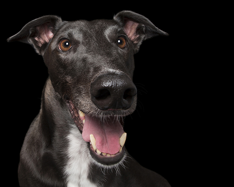 happy_dog2