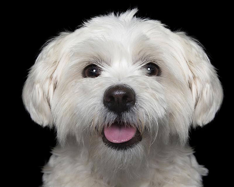 happy_dog3