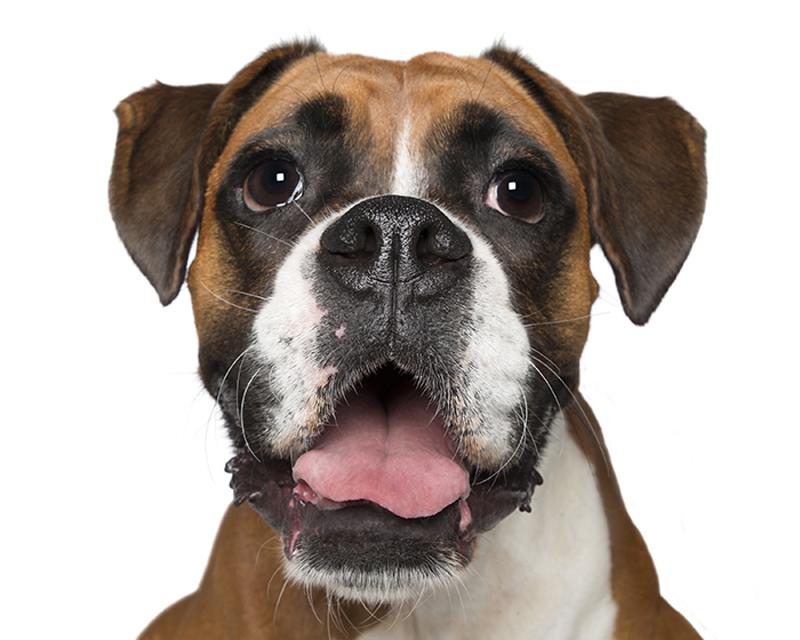 happy_dog4
