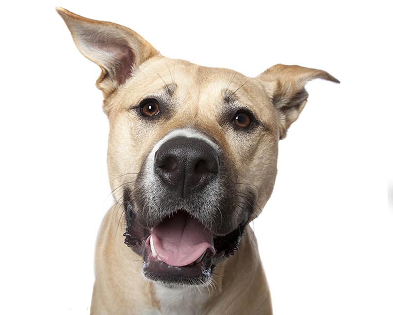 happy_dog6