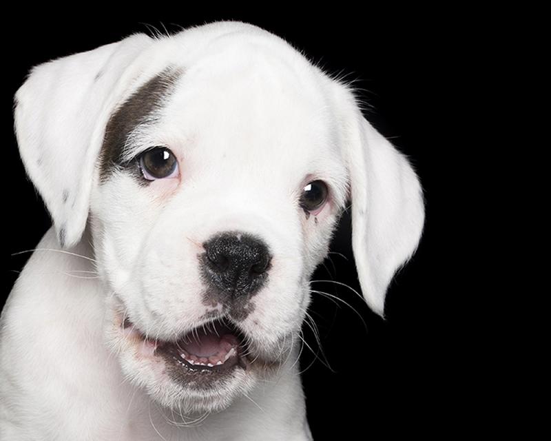 happy_dog7