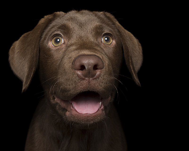 happy_dog9