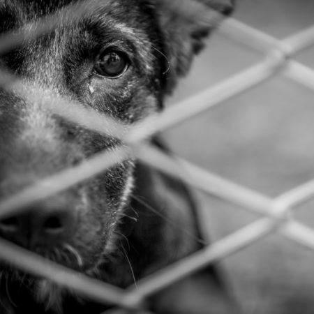 cachorro sozinho e abandonado atrás de grades