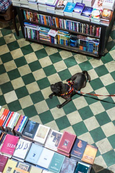Cris Berger/Guia Pet Friendly