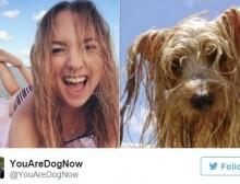twitter_cachorros