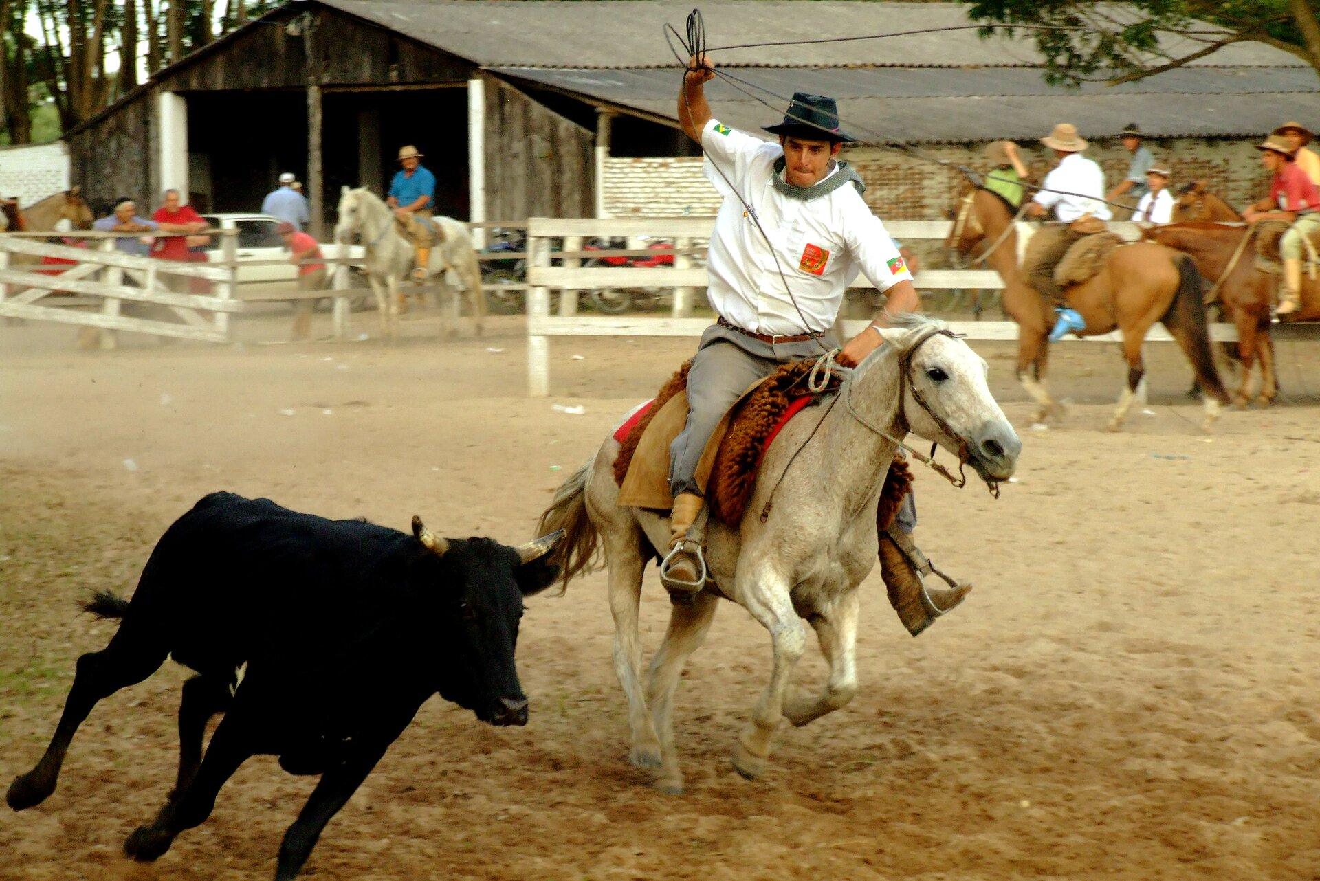 Cavalo Lacando Boi —