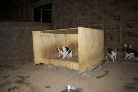 Canis foram encontrados imundos e repletos de ratos