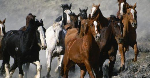 Brasil é um dos maiores exportadores de carne de cavalo