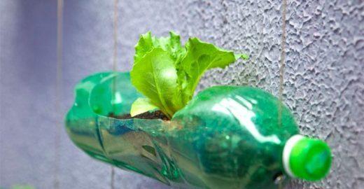 Curso on-line mostra que é possível ter hortas em apartamentos