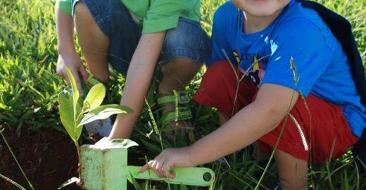 Família planta uma árvore por dia em cidade do interior paulista