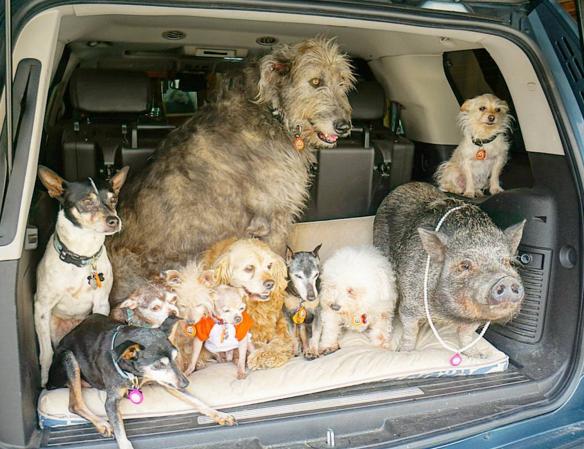 Homem dedica sua vida a cuidar de animais idosos e doentes