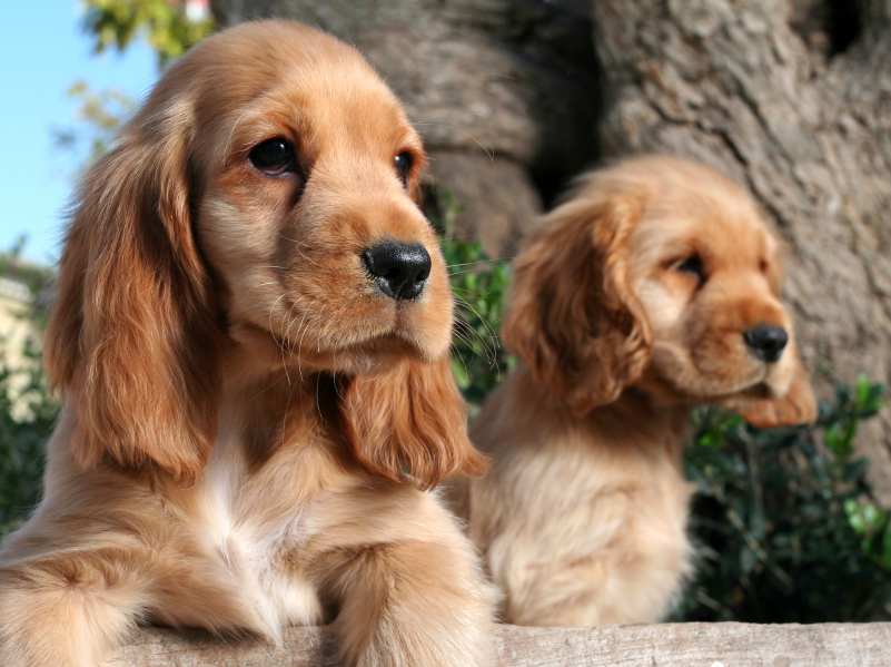 Names For Golden Coloured Dogs