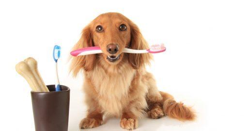 Dicas para a saúde bucal de seu cão
