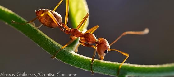 Sociedades matriarcais: formigas