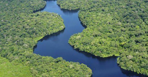 Festival vai plantar um milhão de árvores na Amazônia