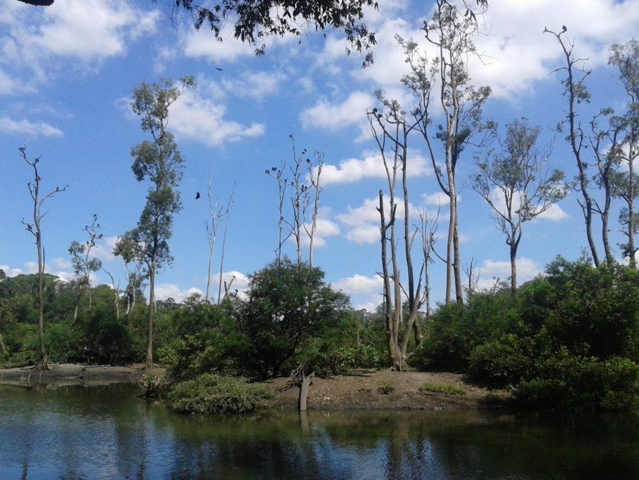 Ilha dos Macacos onde os bichos correm soltos no Parque Ecológico Tietê Foto: Patrícia Ribeiro/Passeios Baratos em SP