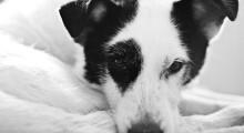 Ensaio emocionante registra história de cão que foi abandonado duas vezes