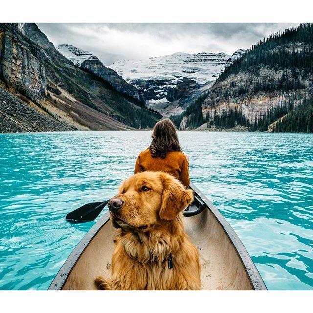 O cão em uma de suas viagens