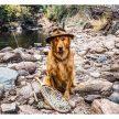 Cachorro acompanha seu dono em viagens para locais paradisíacos