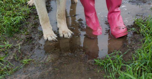 Foto de menina protegendo cão de rua da chuva causa comoção na web