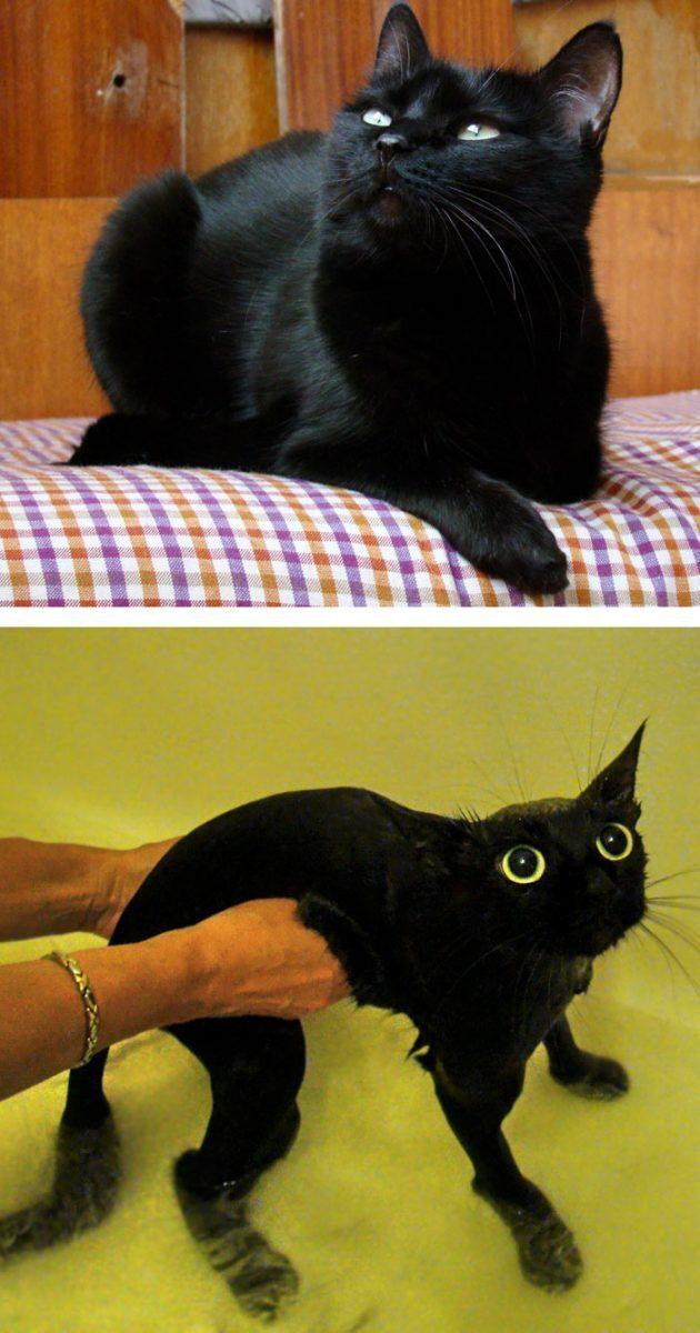 Galeria: cães e gatos antes e depois de tomar banho