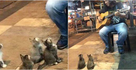 Músico canta para público formado por gatinhos fofos