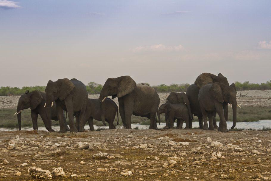 Uma família de elefantes no Etosha