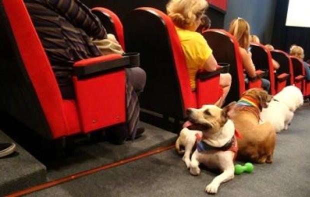 Cães cinéfilos em sessão na Matilha Cultural