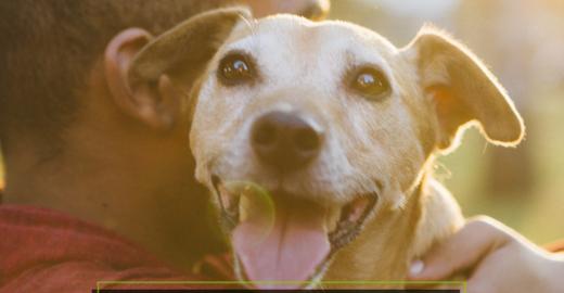 Compartilhe fotos do carinho que você tem pelo seu animal