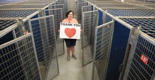 Campanha de adoção salva 45 mil cães e gatos de abrigos