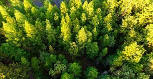 Índia quebra recorde e planta 50 milhões de árvores em um dia