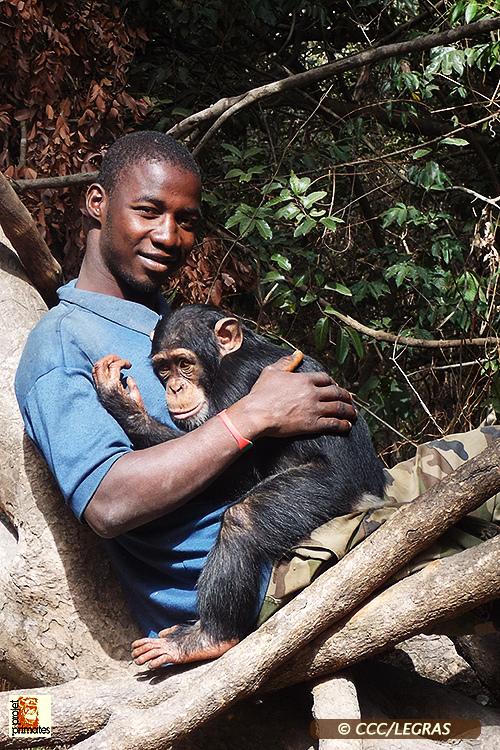 Chimpanzés vivem em abrigo na África