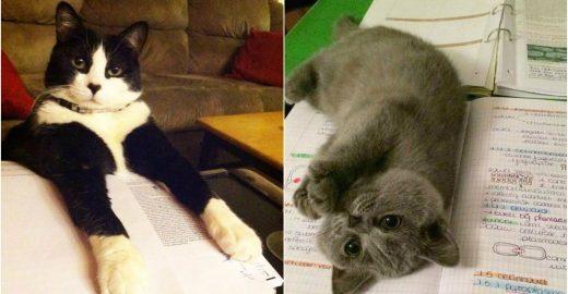 15 gatinhos charmosos que interromperam os estudos de seus donos