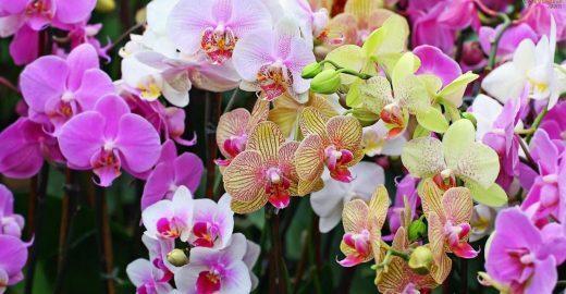 99ª Exposição de Orquídeas celebra a chegada da primavera