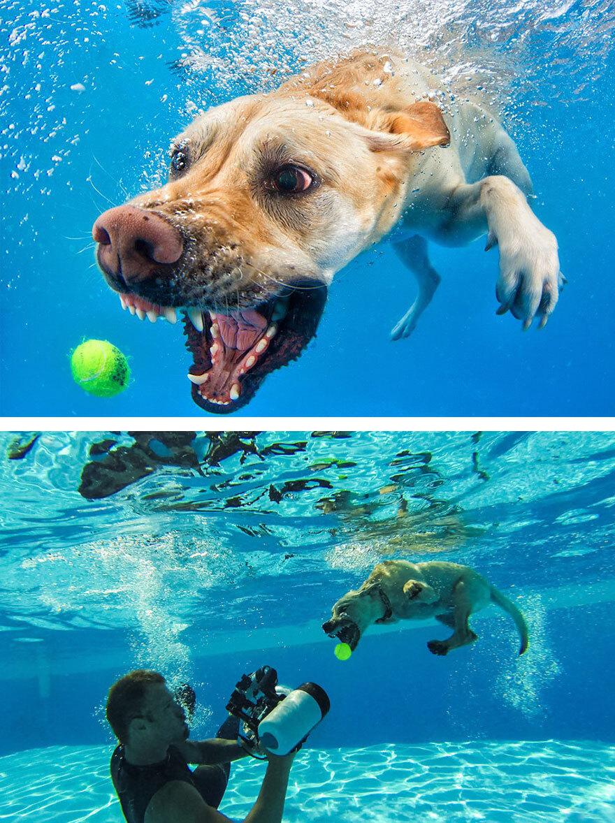 Cão debaixo d'água