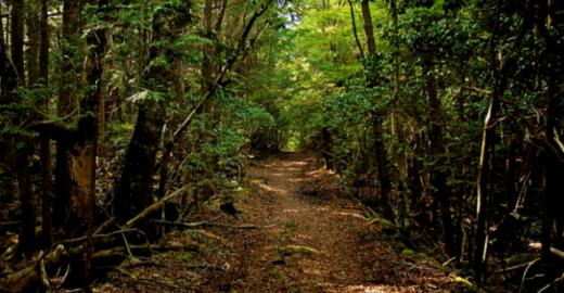 'Floresta dos Suicídios' no Japão é real e causa calafrios