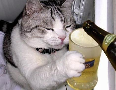 Para quem está mais interessado em cerveja barata do que bichinhos virtuais.