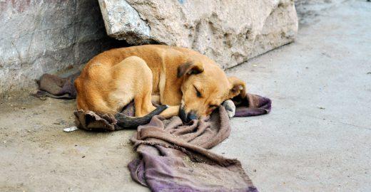Projeto de lei proíbe alimentar animais abandonados em Petrolina