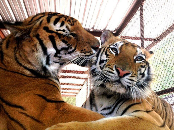 Aasha e seu amigo Smuggler