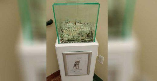 Abrigo de animais recebe doação anônima de R$ 26 mil