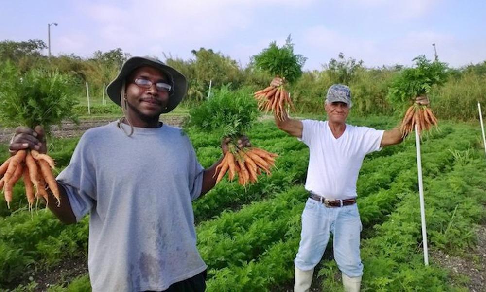 A fazenda de produtos orgânicos já ajudou mais de 10 mil moradores de rua