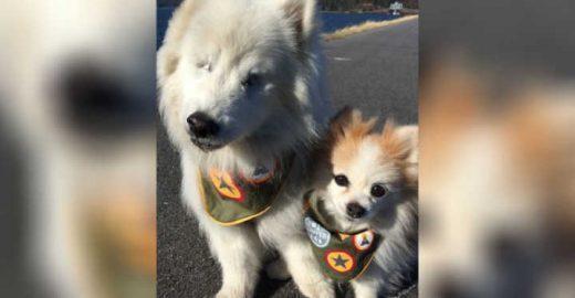 Conheça a história do cachorro cego que tem um cão guia